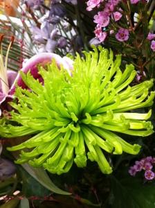 Colours at Birmingham Botanical Gardens