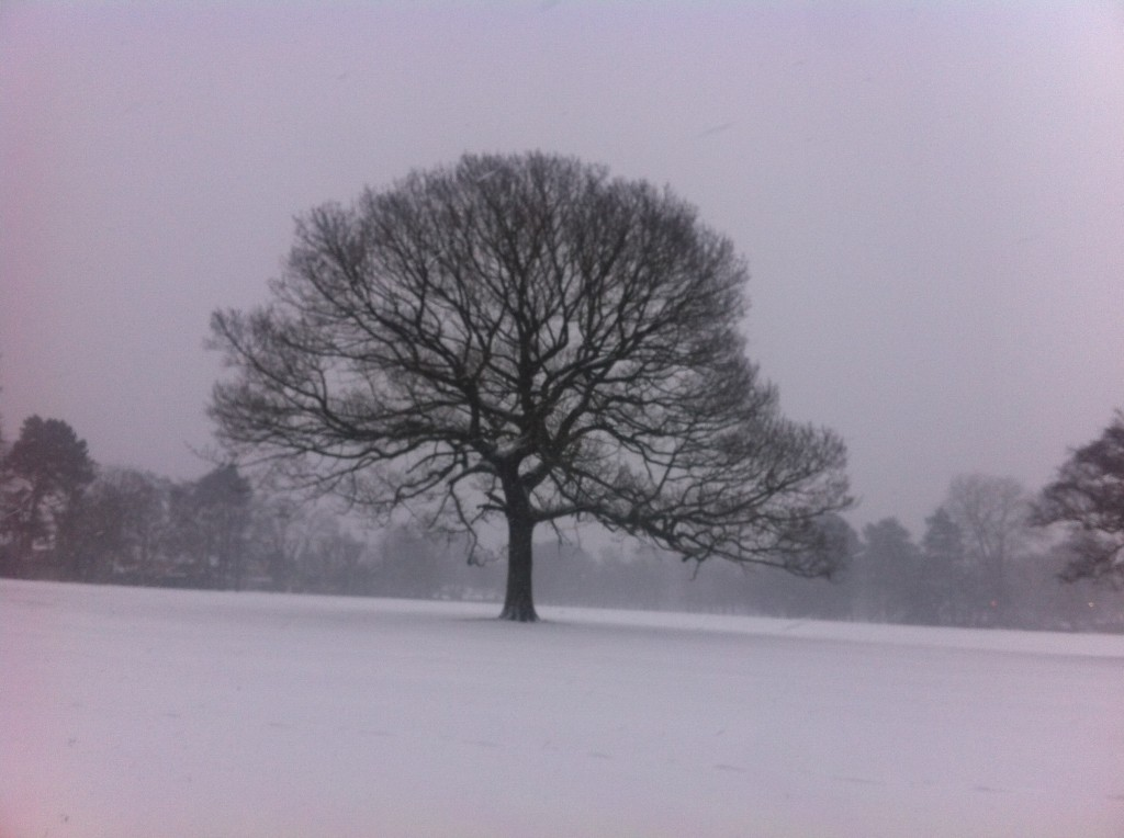 single tree in the snow