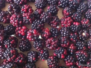 jus rol blackberry pie