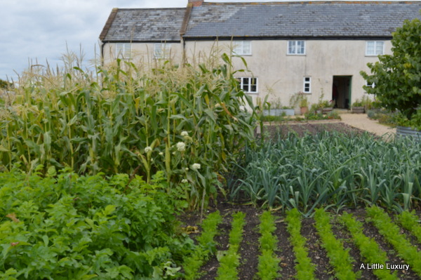 river cottage hq and veg garden